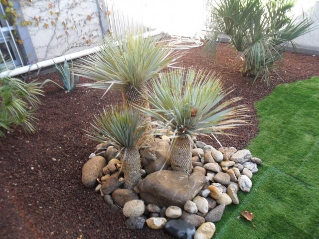 Agaplantes paysagiste sur l 39 adge s te b ziers depuis 1981 for Decoration jardin avec palmier